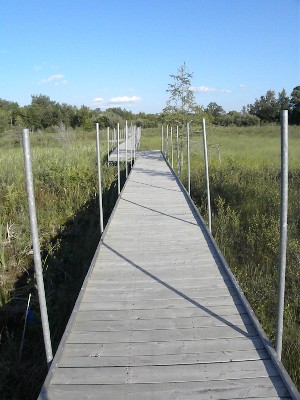 View of the Bog Walk extending over the Bog